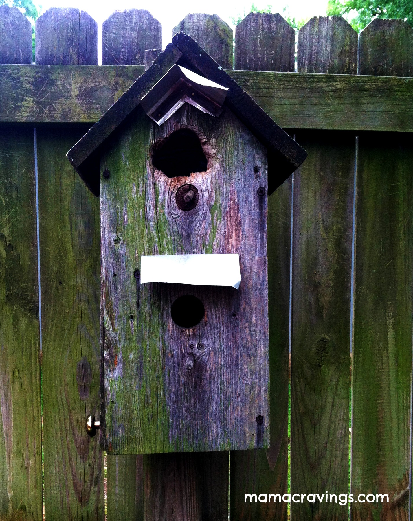 quick bird house plans